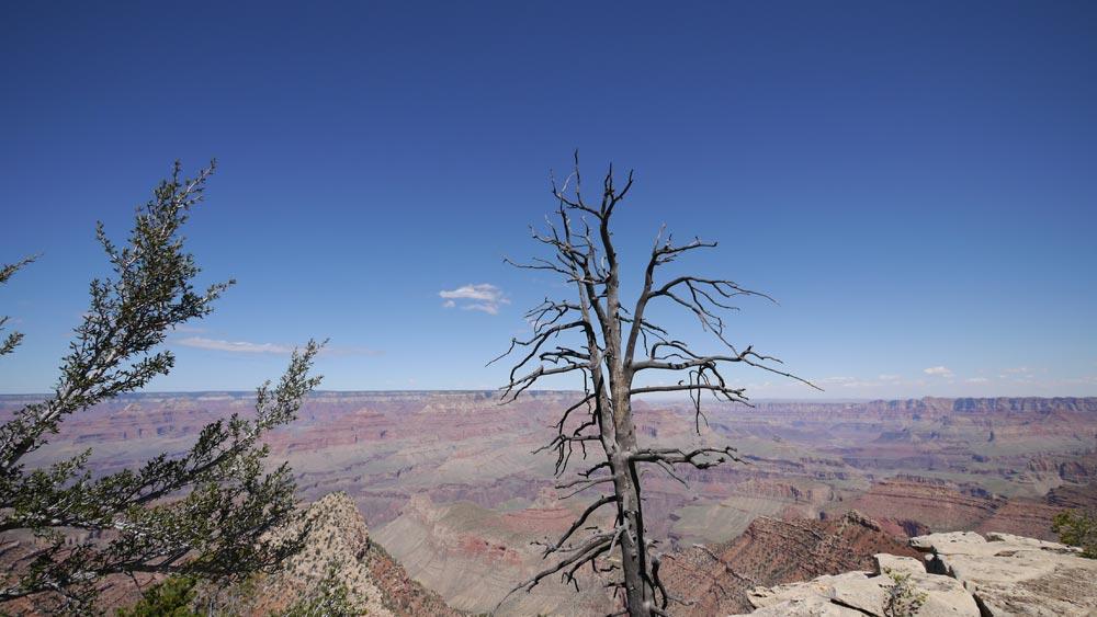 枯れ木も撮る