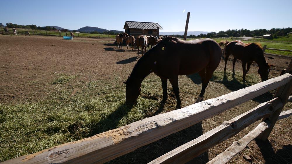 レストランの駐車場を挟んで向いに馬がいる