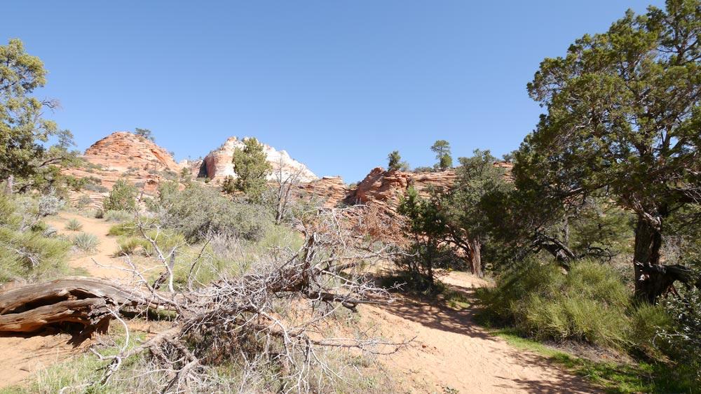 見どころ以外はこんな岩の景色が続きます。