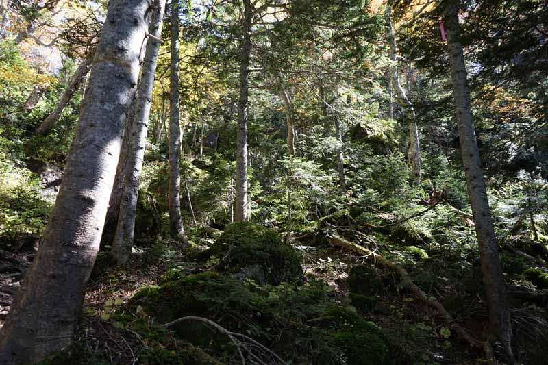 苔が生えてて、気持ちのよい森