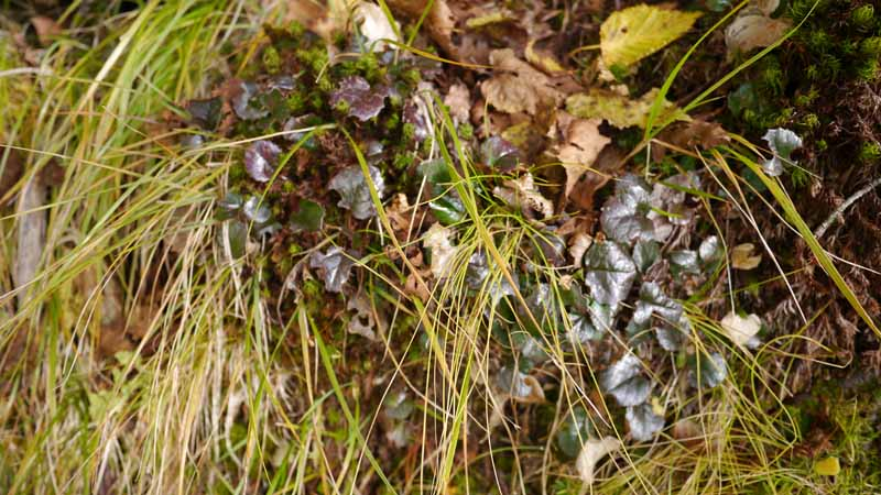 下山するにつれ、この面白い色をした植物が増えてきた