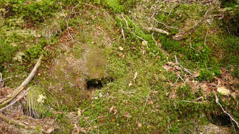 謎の洞穴と、苔?