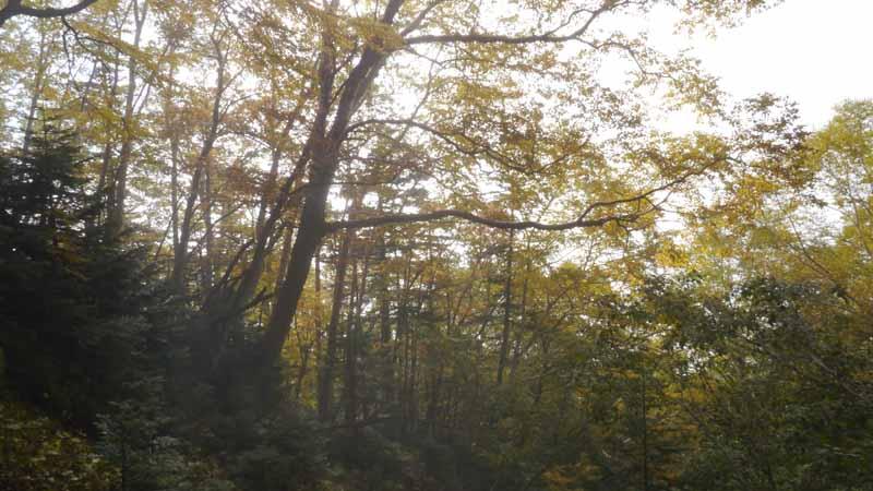 高い木に囲まれた行きと似たような森の中