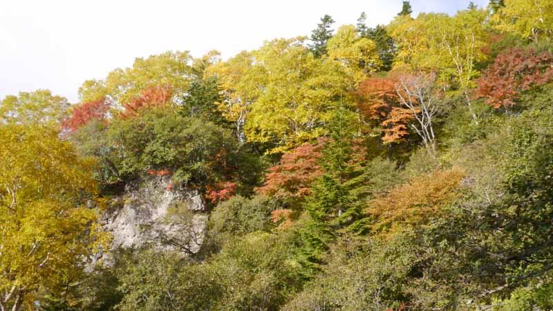 紅葉した木が見えてくるようになってきた